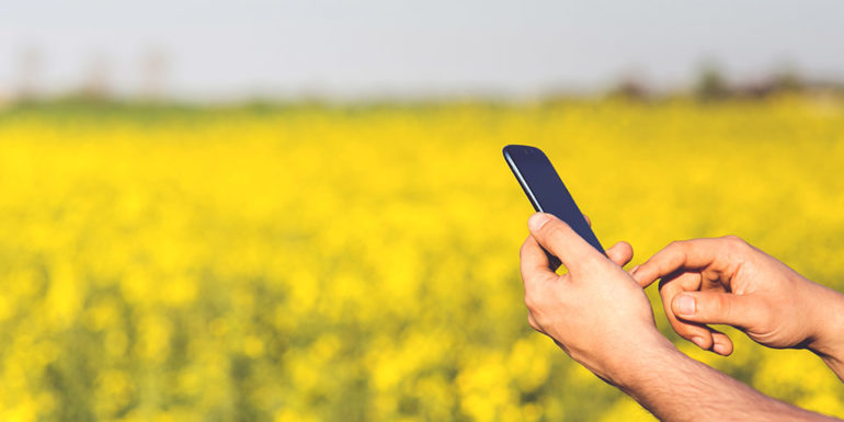 A person using a smartphone in a field of flowers